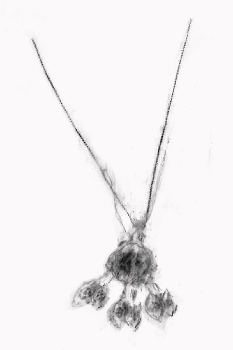 Charcoal drawing of a necklace
