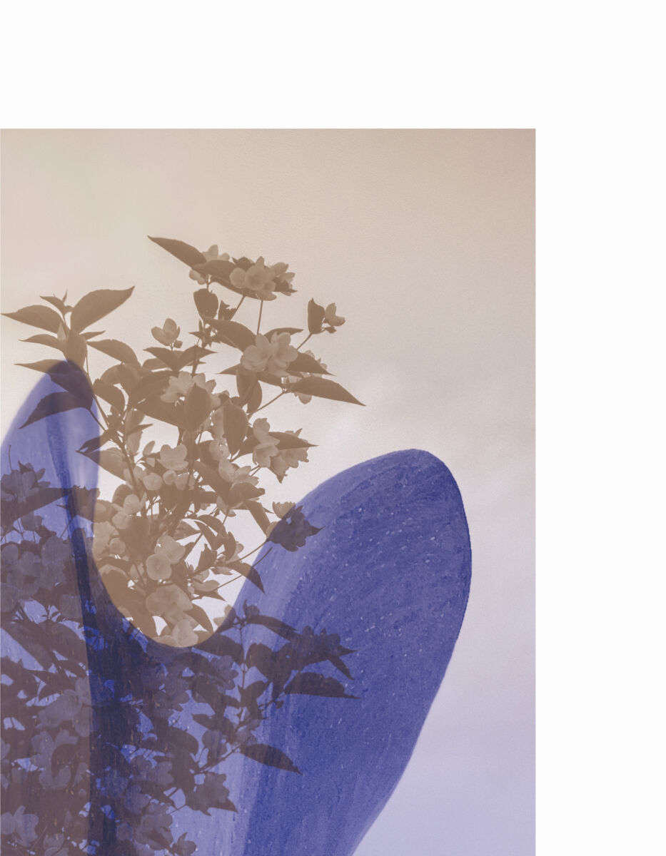 duotone detail of sculptural form and plants